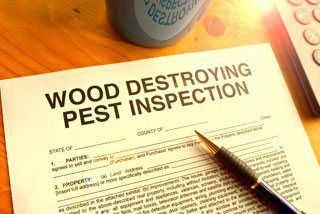 borer pest inspection