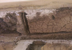 Termite damage inside brick foundation