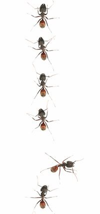 Ant removal melbourne