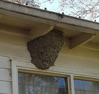 Wasp Nest Removal in Melbourne