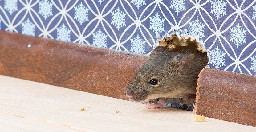 This Winter, It's about being Comfy and Pest-free!