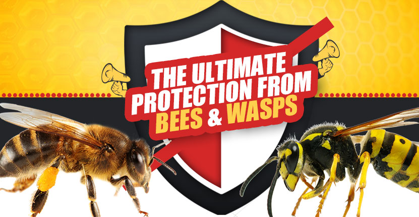 Difference Between Bees And Wasps Protech Pest Control