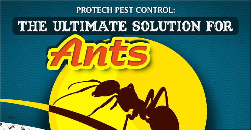Protech Pest Control The Ultimate Solution For Ants