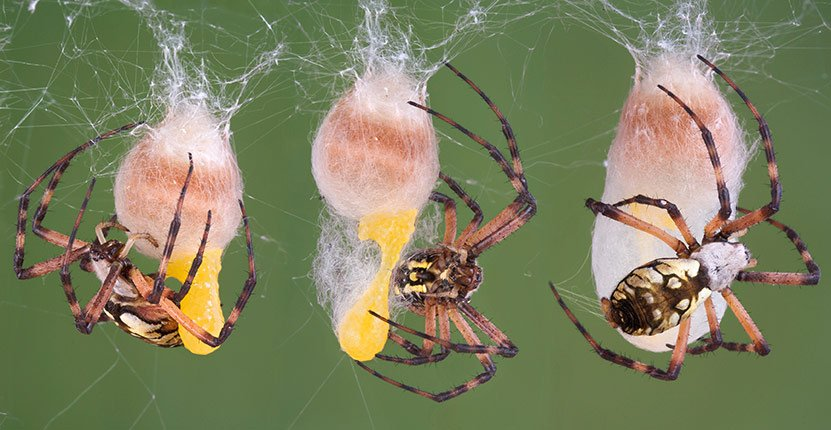 How to keep unwanted spiders away from your home for How to keep spiders away from your bed