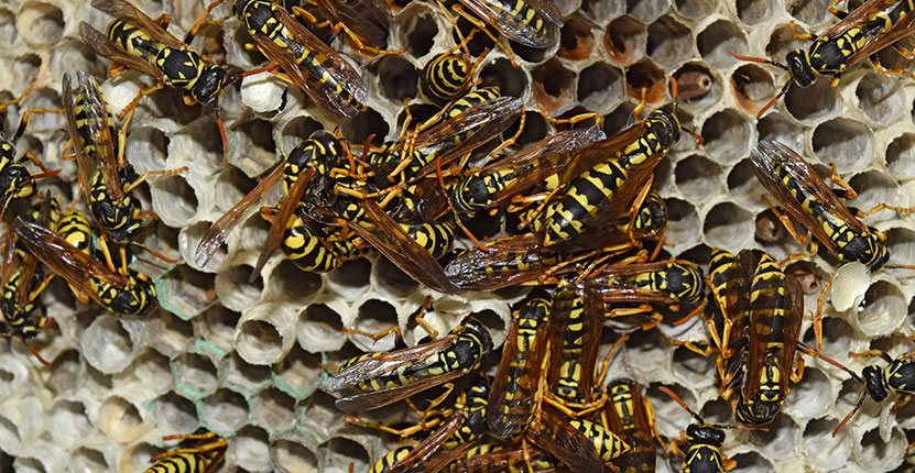 Effective Methods That Might Help You Deal With Wasps This