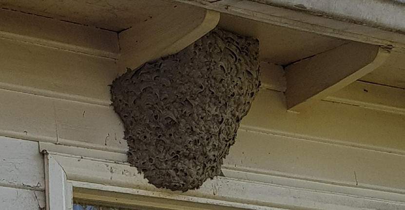 Insects Nests How To Identify And Remove