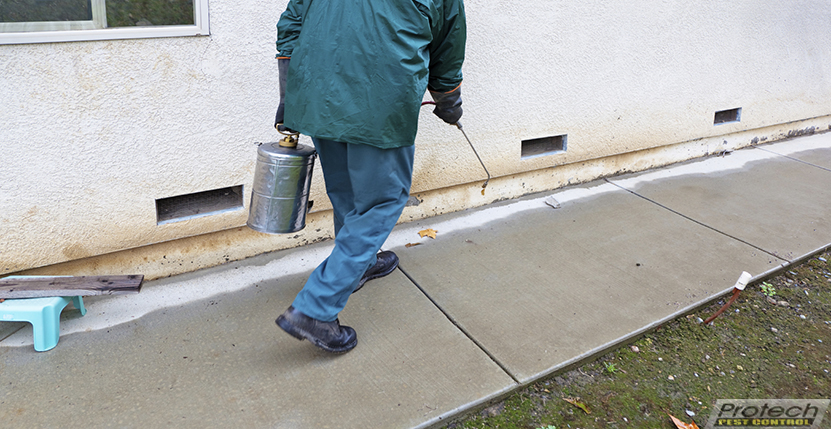 Pest Control: Advantages of Keeping Pests at Bay