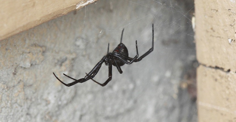 The 10 Must-Knows About Spiders