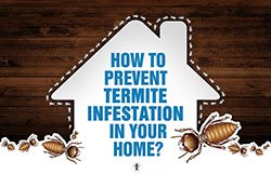 Get Rid of Termites through Professional Termite Treatment