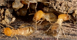 10 Tips to Make Your Home Termite Proof