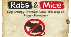 Comprehensive Information on Rats and Mice Infographic