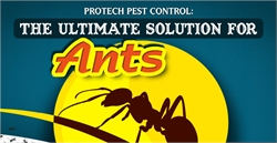 Protech Pest Control: The Ultimate Solution for Ants
