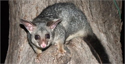 Effective Solutions to Keep Possums Away From Your Home