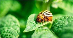 12 Ways to Naturally Prevent Garden Pests