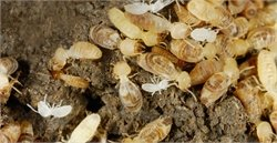 What to Do When Termites Strike